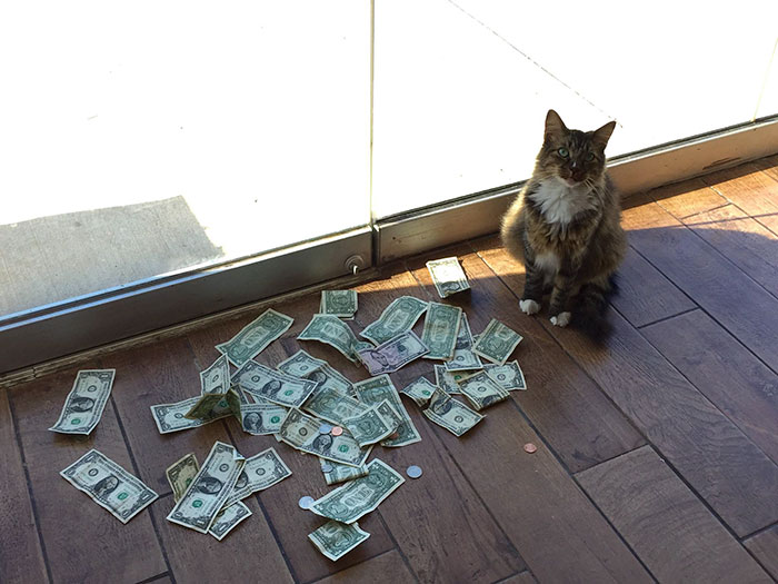 This Rescue Cat Is Stealing Money From Strangers And It All Goes To Homeless