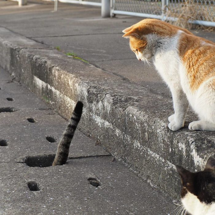 Stray Cats Can't Stop Playing With These Holes