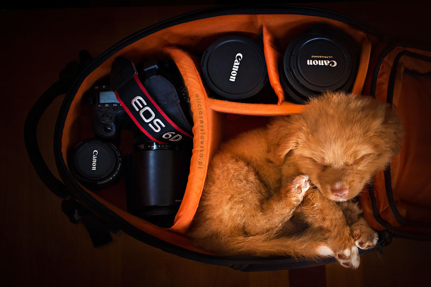 Puppies Decided To Sleep And Have Fun In My Camera Bag