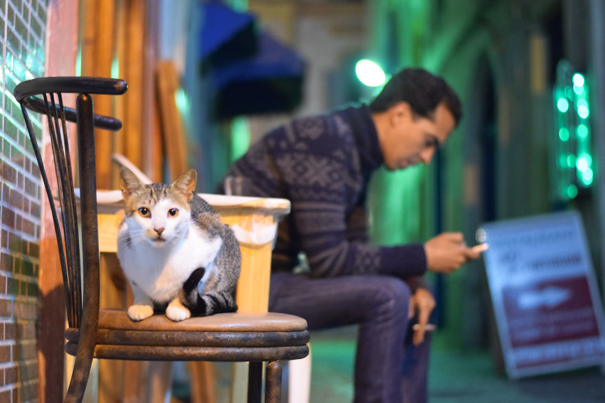 Is This Cat City?? Capturing The Cats Of Essaouira, Morocco