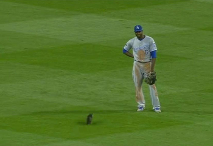 kitten-disrupts-baseball-game-busch-stadium-2