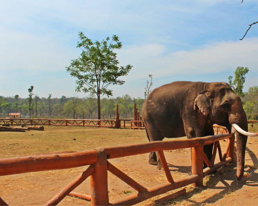 I Spent Sometime At The Dubare,karnataka And Could Not Feel Enough Affection For The Elephants There