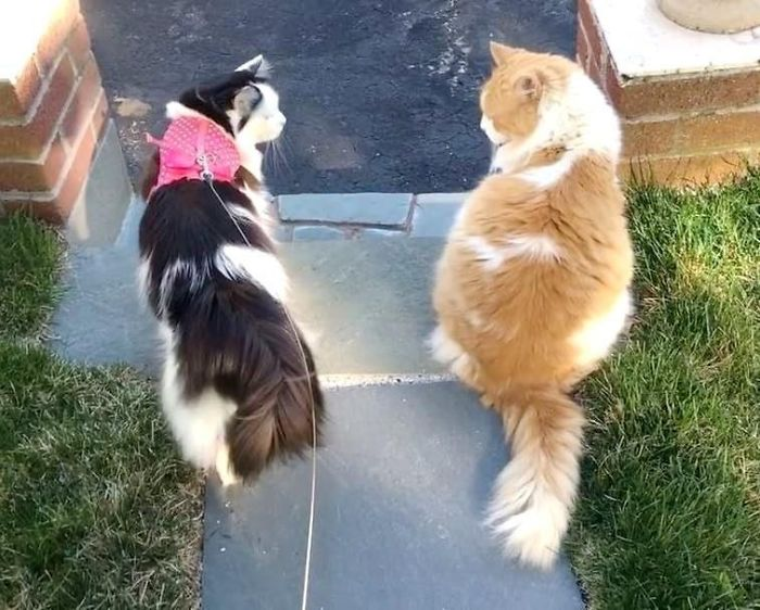 Every Day For 2 Years Neighbor's Cat Comes To See The Love Of His Life