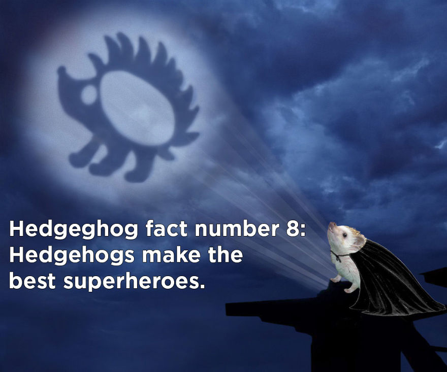 You Won't Believe These Twenty Amazing Facts About Hedgehogs The Government Doesn't Want You To Know
