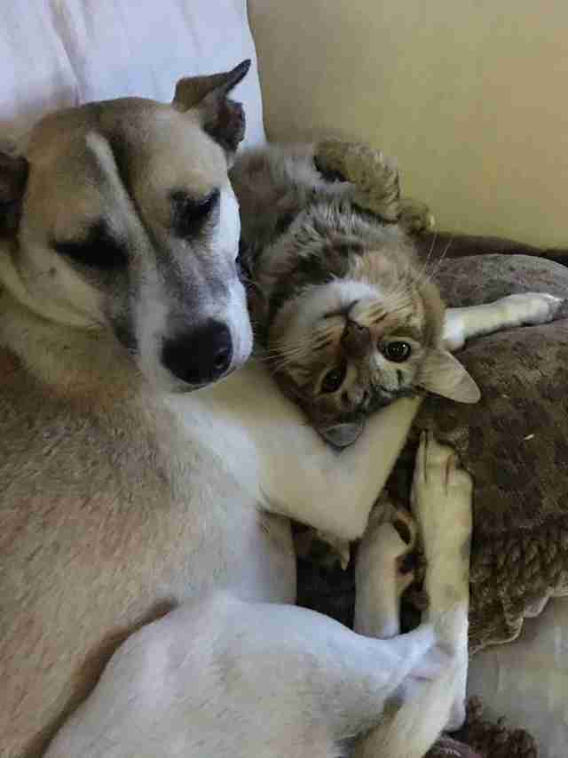 Dog and cat snuggling together