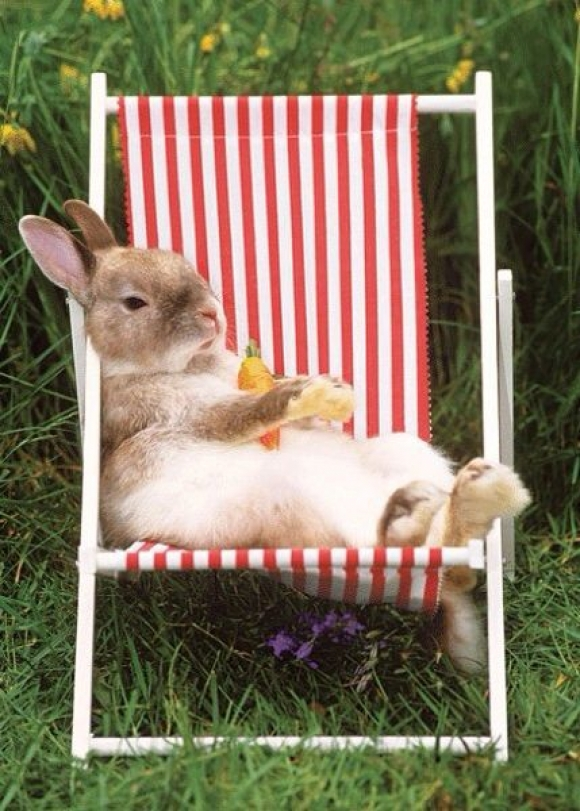 A little rest and relaxation for rabbit