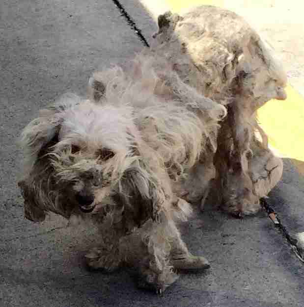 Matted Dog At Gas Station Kn…