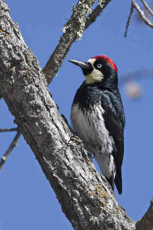 Man Renovating House Discovers Woodpecker's Secret Stash