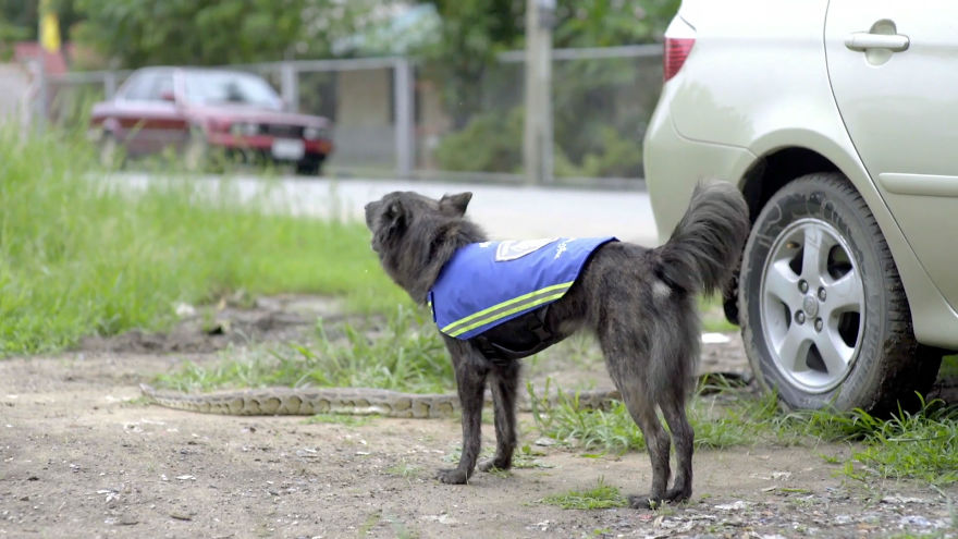 See Stray Dogs Amazingly Turned Into Watchdogs