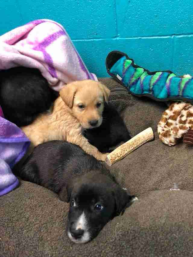 rescue puppies texas tire