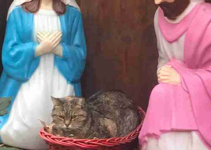 Grumpy Nativity-Scene Cat Accidentally Spreads Holiday Cheer