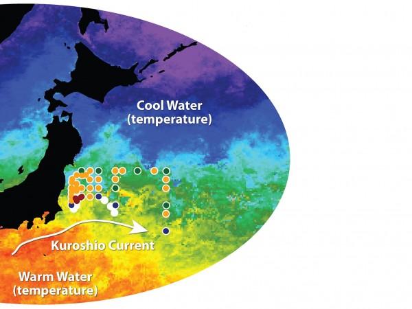 Fukushima radiation nears California coast, judged harmless