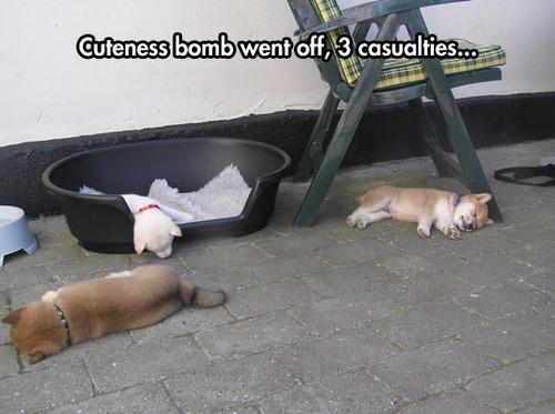 Cuteness Bomb