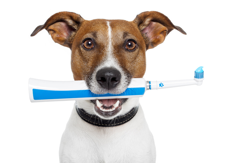 10 Steps to Brushing Your Dog's Teeth