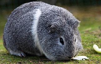 10 Popular Small Pets