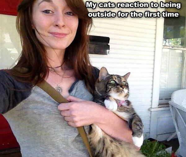 Cats Great Reaction