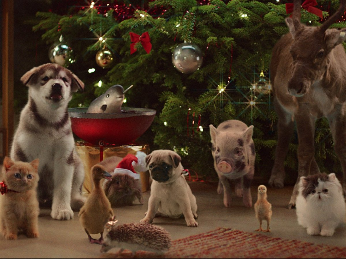 People Are Complaining That The McVitie's Fluffy Animal Ad Could Encourage People To Buy - And Then Abandon - Their Pets At Christmas