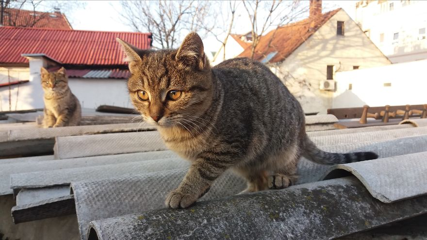 Web Designer From Belgrade Takes Pictures Of Street Cats As A Remainder Of Her Youth