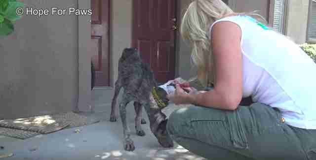 Starving Dog Found 2 Years After Her Owner Thought She Died
