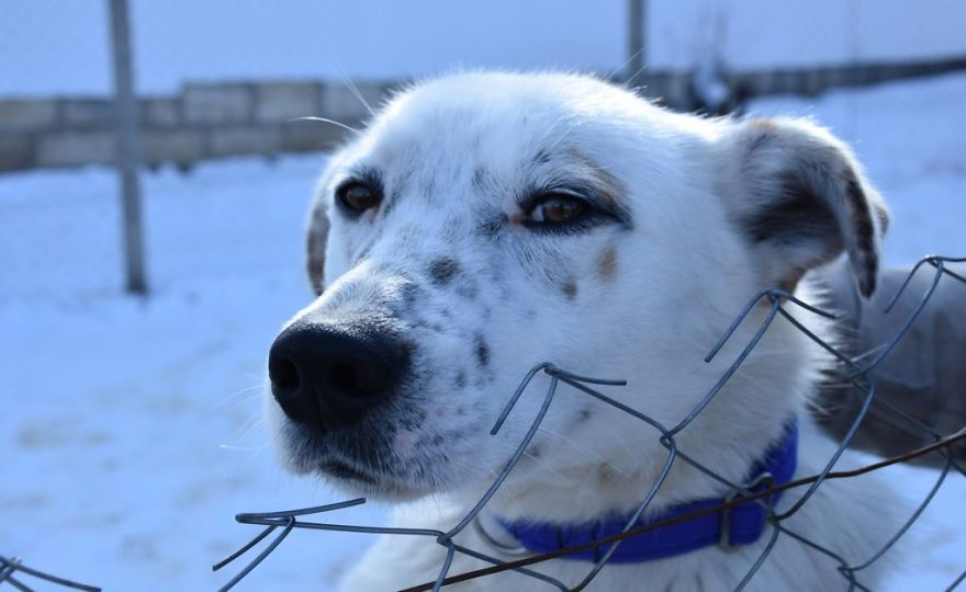 Helen's House Of Hope: A New Life For The Abandoned And Mistreated Dogs Of Bulgaria