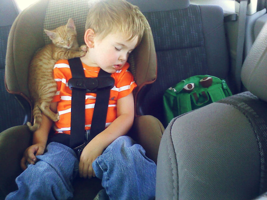 These New Pics Of Kittens Sleeping Anywhere Will Make You Have Fun