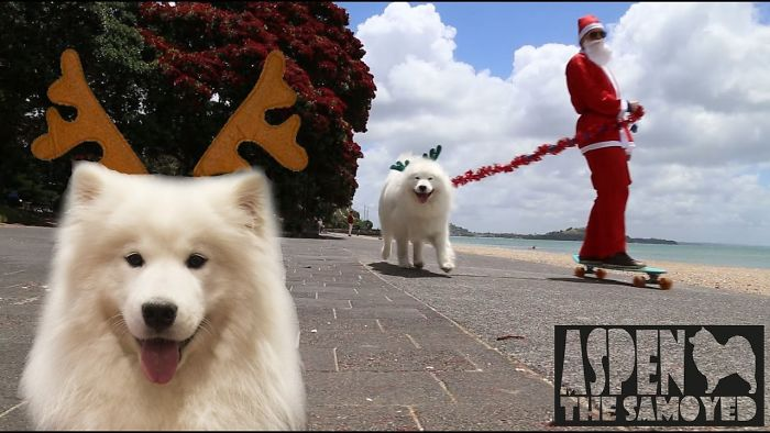 "I Dressed Up As Santa And Spread Some Christmas Joy Around The City With My ""Reindeer"", Aspen The Samoyed"