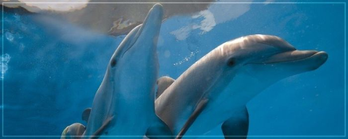 Dolphins: A Priceless Friend For The Human ( A Great Story )