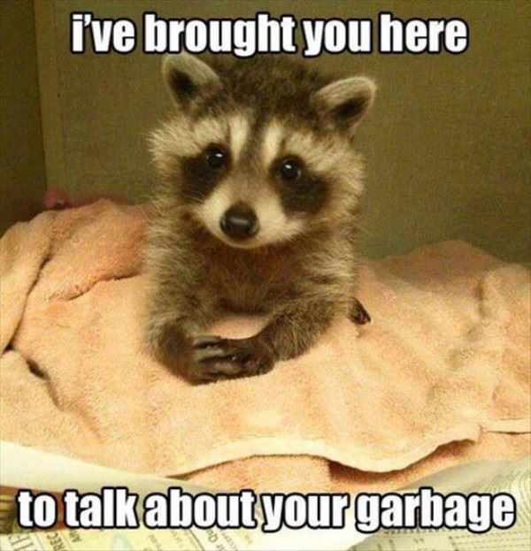 Baby Racoon Brought you here
