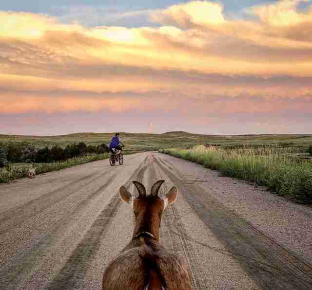 Couple Decides To Travel The Country — And Brings Their Goat Along