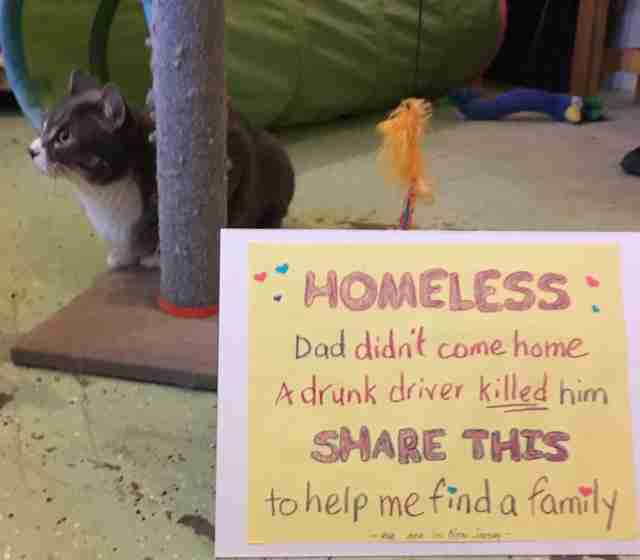 Cats who need homes after owner was killed