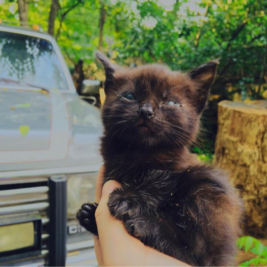 Meet Inky, The Kitten With No Eyelids