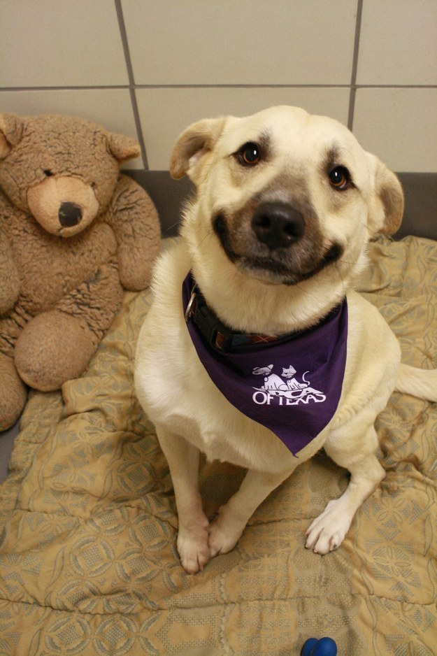 31 Animal Smiles That Will Make You Too Happy