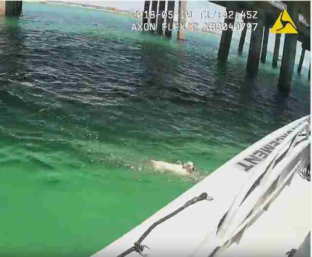 Officer Notices 'Sea Turtle' In Water — Then Realizes It Has Fur