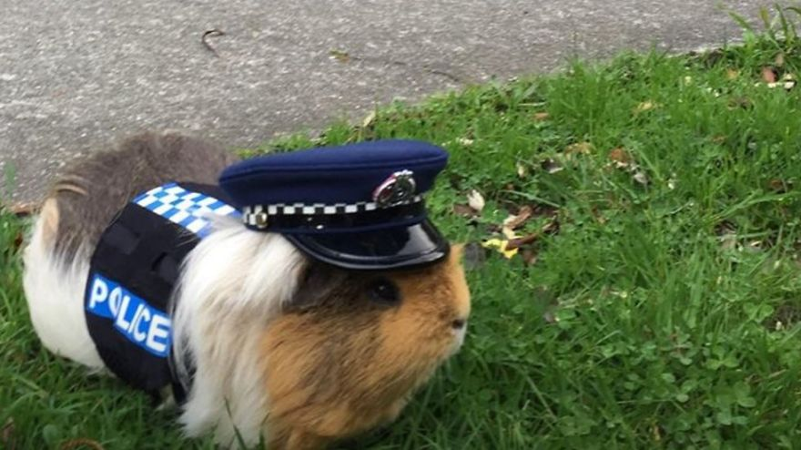 Here Comes Constable Elliot From New Zealand Police Department With A Cuddly Face And A Heavy Agenda!