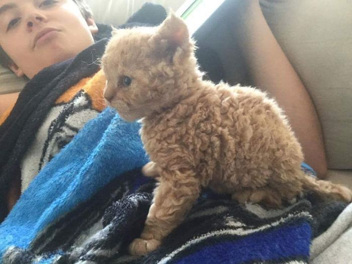 These Curly Cats Who All Descended From One Shelter Kitty Are Taking Internet By Storm