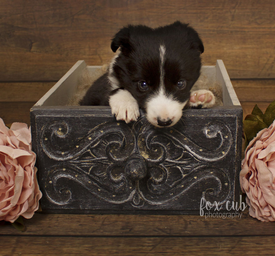 I Did An Adorable Newborn Puppy Photoshoot