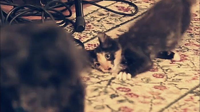 Stealthy Ninja Kitten