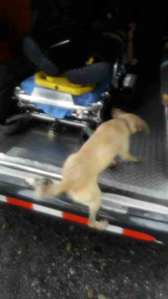 Dog jumping into ambulance in Costa Rica