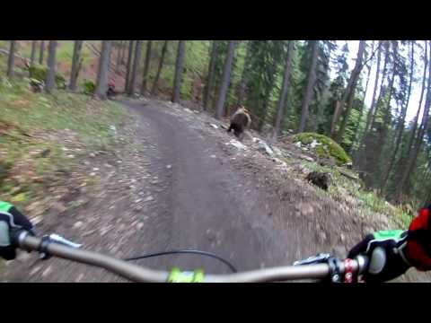 Angry Bear Starts Chasing Mountain Bikers In Frightening Helmet Cam Footage