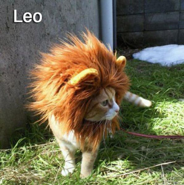 Funny images with cats recreating the 12 Signs of the Zodiac