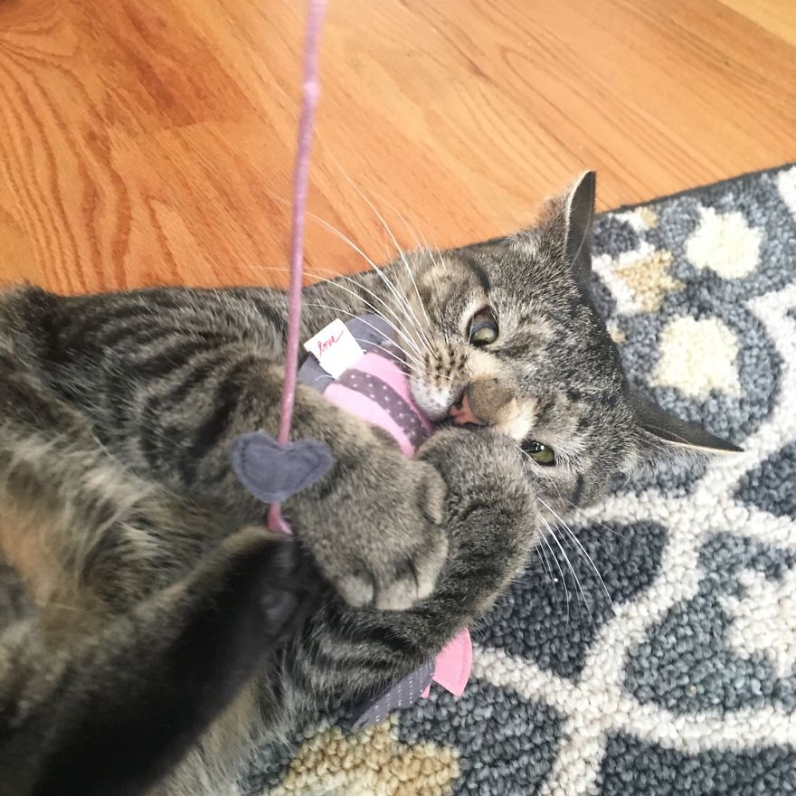 Meet The Cat With An Extra Chromosome Put On Death Row Because She Looked A Little Different