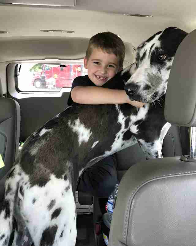 Travis the first grader and his new adopted dog