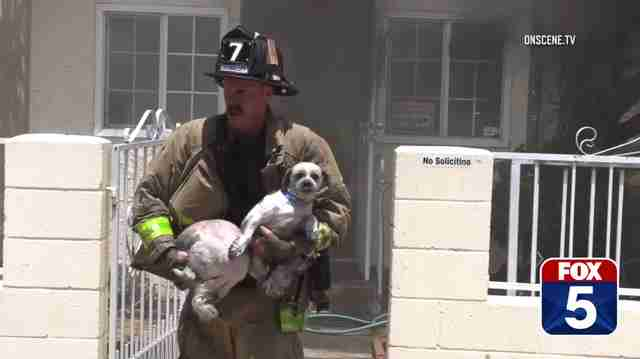 Brave Firefighter Rushes Into Burning Home To Save Dogs Trapped Inside