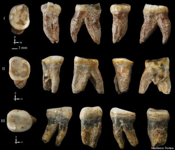 Ancient Human Fossil Could Be New Primitive Species