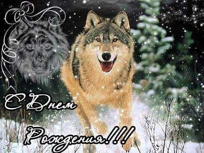 Открытки волки