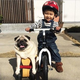 This Little Boy And His Pug Are The Cutest BFFs On The Planet