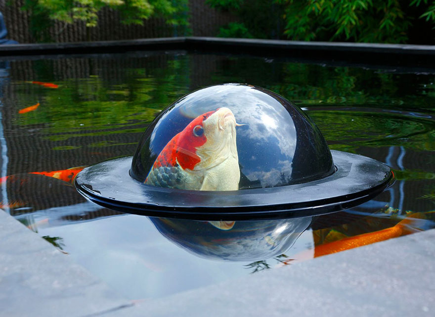 Floating See-Through Dome Lets Fish Look At The Outside World