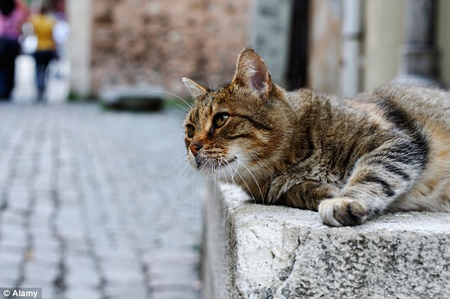Spanish town has voted to give cats and dogs the same rights as humans