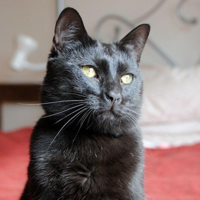 Shelter Writes Brutally Honest Adoption Memo For Their 'Utter Bastard Of A Cat'