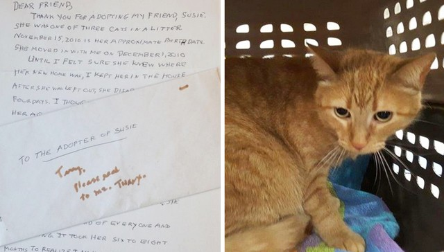 Dying Woman's Touching Letter Gets Her Cat What She Needed Most